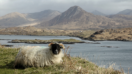Private Tour of Connemara